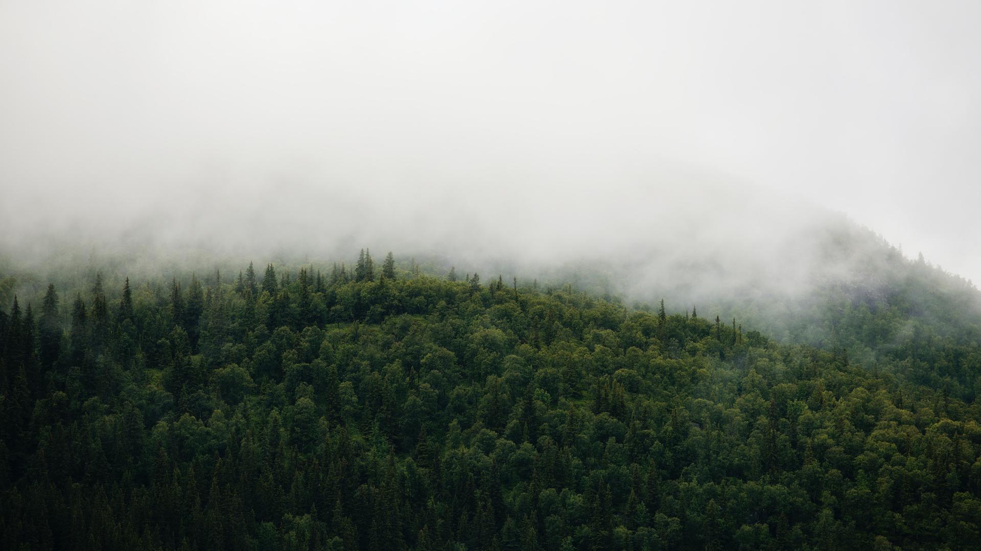 Google Cloud Partners With WWF to Make Environmental Data Platform